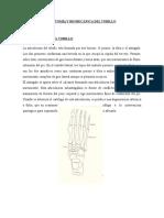 Anatomia y Biomecanica Del Tobillo