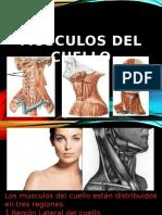 Musculos LATERALES CUELLO