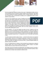 NEWSLETTER LICINIA DE CAMPOS  29 - flor do sal.pdf
