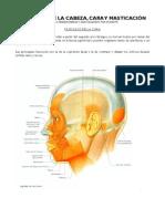 Resumen Musculos de La Cara