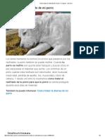 Cómo Tratar El Resfriado de Mi Perro - 9 Pasos - UnComo