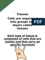 2 Tissues