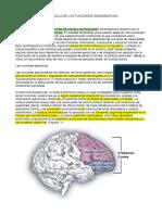 Unidad 1 - Neurodesarrollo de Las Funciones Cognoscitivas