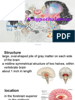 thalamus and hypothalamus