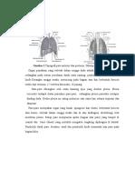 Anatomi paru