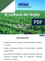 A cultura do feijão_Parte I.pptx