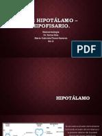 Eje Hipotálamo – Hipofisario