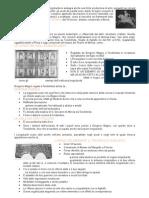 istituzioni di storia dell'arte 1 primo modulo punti 5-6 - 8
