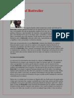 Historia del Rottweiler.pdf