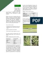 Conozca+la+deficiencia+de+hierro.pdf