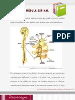 Lectura Semana 7- Medula Espinal
