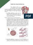 Sindrome Del Dolor Miofascial (1)