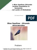 Blue Swallow Presentation