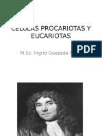 CELULAS PROCARIOTAS Y EUCARIOTAS FINAL II 97.pptx