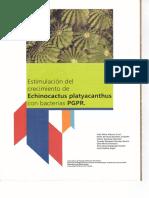 Estimulación del crecimiento de Echinocactus platyacanthus con bacterias PGPR