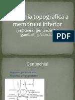 Membrul Inferior 2015