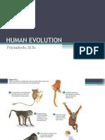 2015 Evolusi Evolusi Manusia