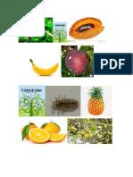 Lámina frutas