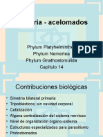 Planaria 1