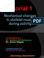 Tutorial 1 Mechanichal Changes in Skeletal Muscle