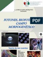 3 Fotones Biofotenes y Campo Morfico Feb 2012