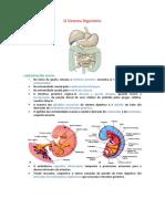 embriologia sistema digestorio