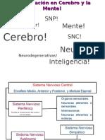 Investigacion en Cerebro