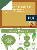Biologi Jaringan Meristem Dan Epidermis