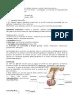 Histologia Sistema Endocrino