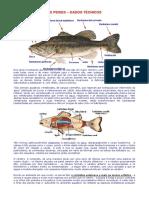 Peixes_-_Dados_Tcnicos
