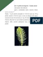 Utilizarea Plantelor in Grdina de Legume_coada Calului