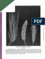 The Origin of Hooded Barley