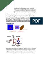 Sistema Nervioso Viceral