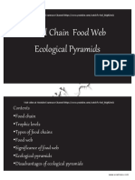 Food Chain Youtube Lecture Handouts