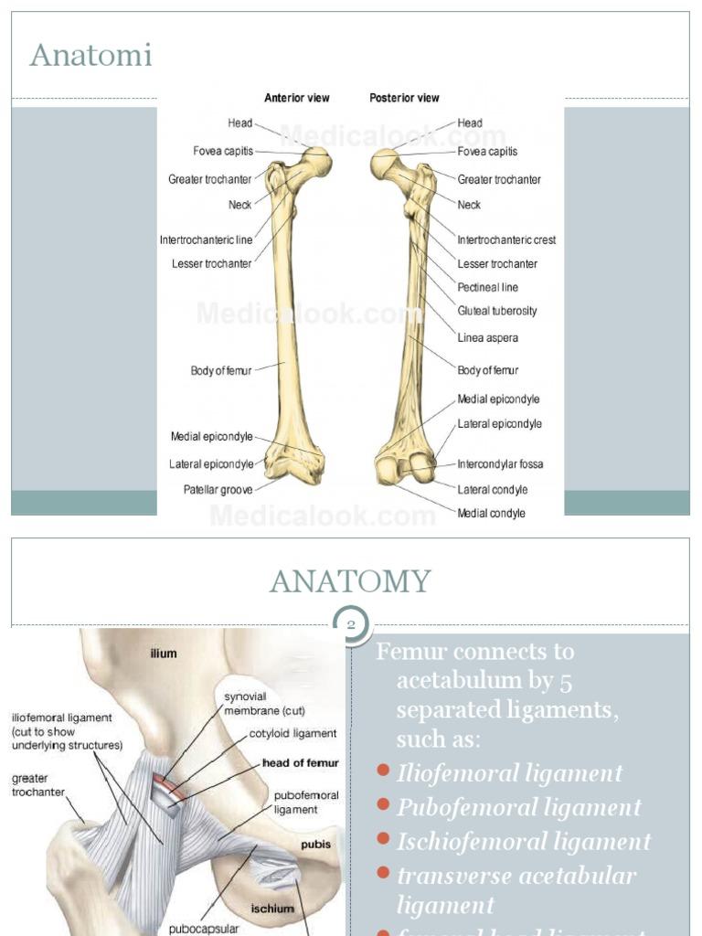 Dislokasi Hip 2 Hip Knee
