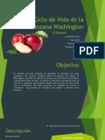 Ciclo de Vida de La Manzana