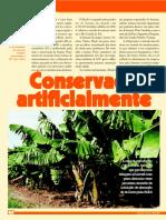 Conserva de Bananas Cultivo