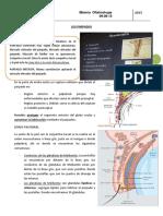 Los Parpados- Dr Sebastian