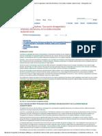 El Pajuro o Chachafruto. Una Opción de Seguridad y Soberanía Alimentaria, En Los Andes Orientales Sudamericanos - Monografias