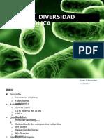 TEMA 4 Diversidad metabólica.pptx