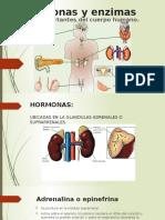 Hormonas y Enzimas