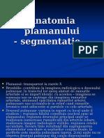 158797130 LP Anatomia Plamanului