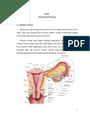 Kista Ovarium Terpuntir Doc