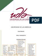 Universidad de Las Americas Division Celular