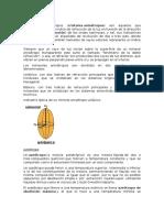 analisis-y-biologia.docx
