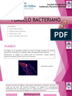 FLAGELO BACTERIAANO