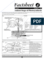 106713670-153-the-Light-Dependent-Stage-of-Photosynthesis.pdf
