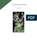 Parthenium Hystrophorous a Poisonous Plant