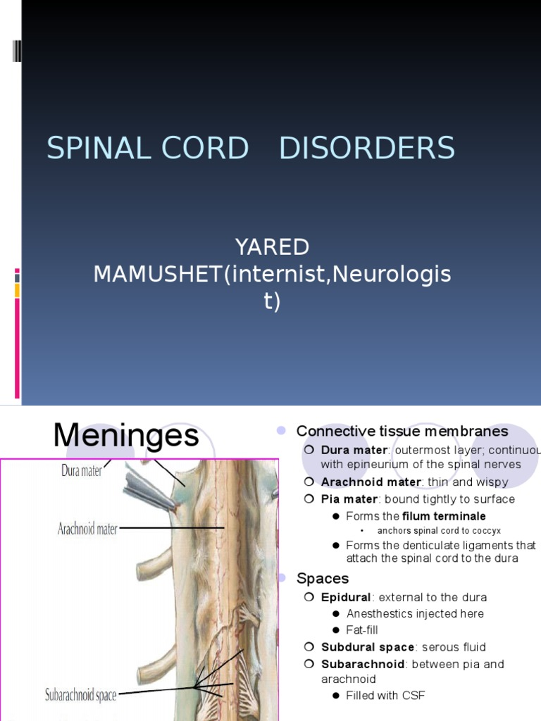 Spinal Cord Disorders Yared Ppt Vertebral Column Spinal Cord Filum terminale | definition of filum terminale by medical. spinal cord disorders yared ppt
