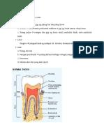 Anatomi Gigi Sehat Dan Sakit